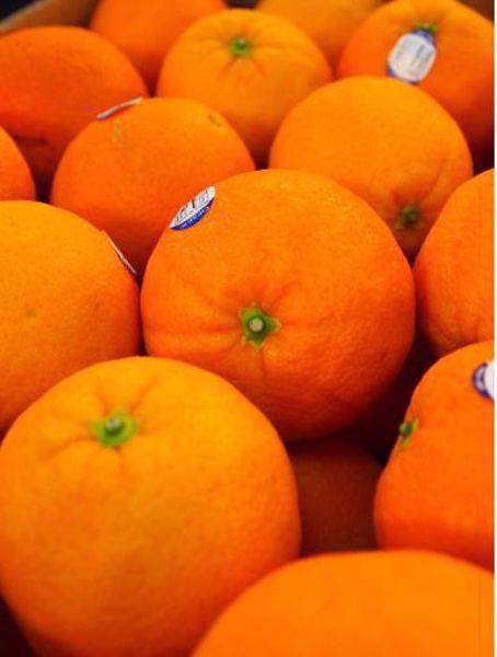 [한국청과] 발렌시아 오렌지(미국산) 4kg